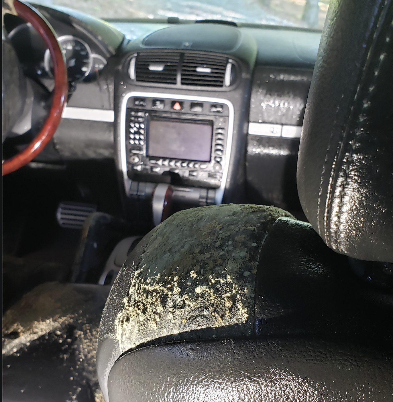 Automotive Mold Removal - What You Need to Know