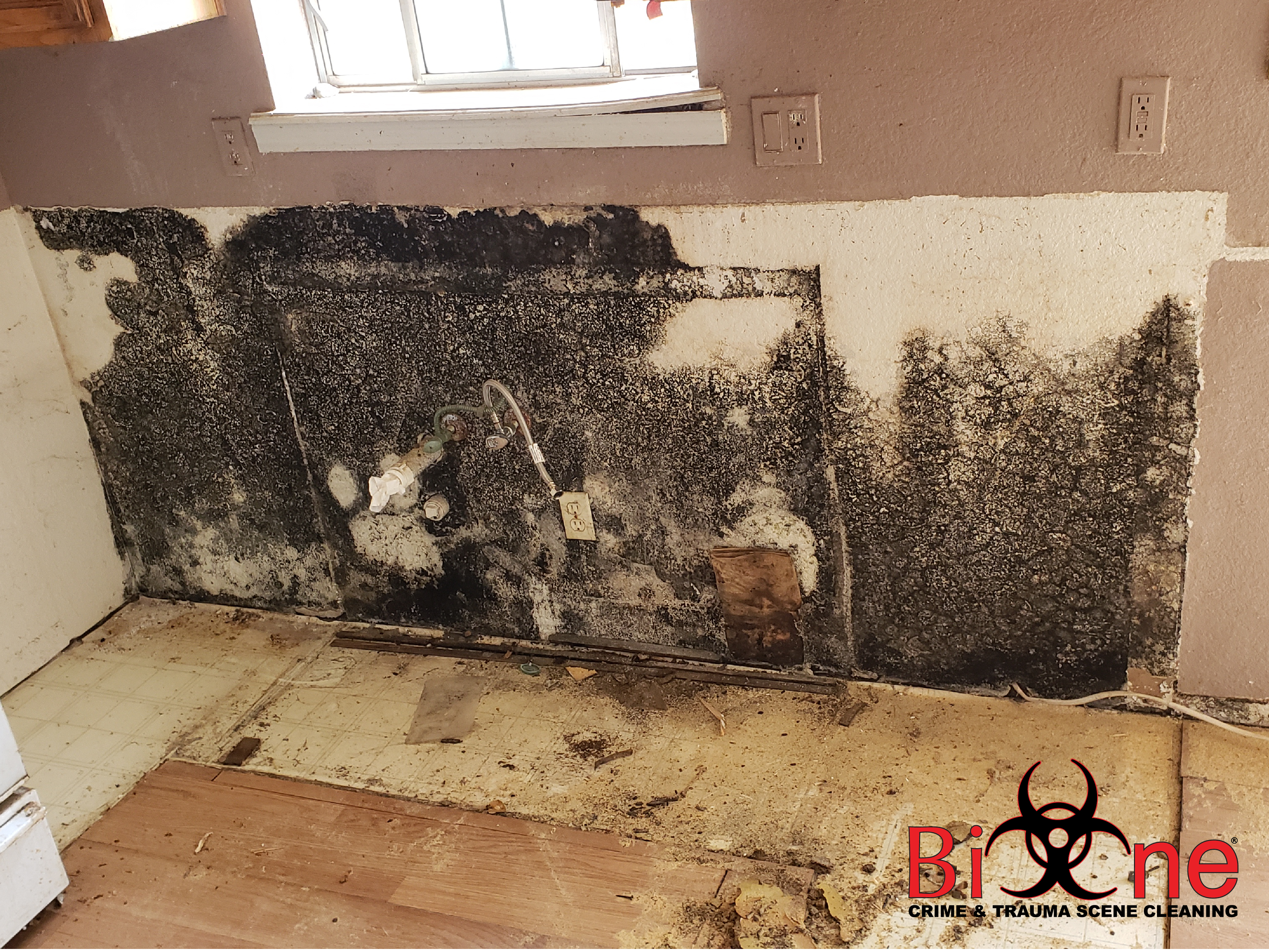 Mold Testing and Mold Remediation Services - What You Need to Know